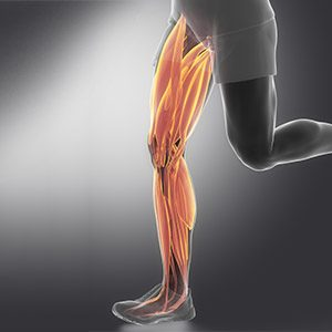 Physiotherapy in edmonton for muscle pain: muscle tear, pulled muscle, compartment syndrome, muscle tightness